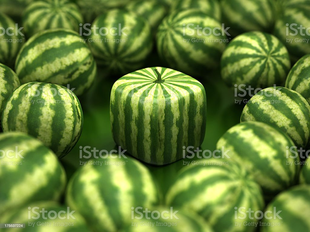 Cube watermelon stock photo