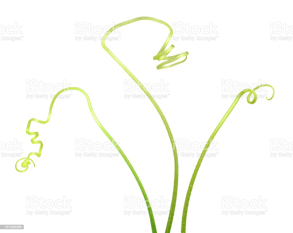 Cucumber Design Tendrils royalty-free stock photo