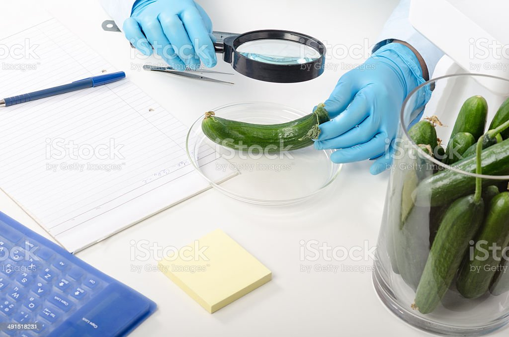 Cucumber inspected in phytocontrol laboratory stock photo