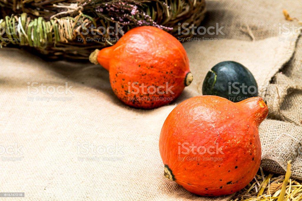 Cucurbita реро. Gourd stock photo