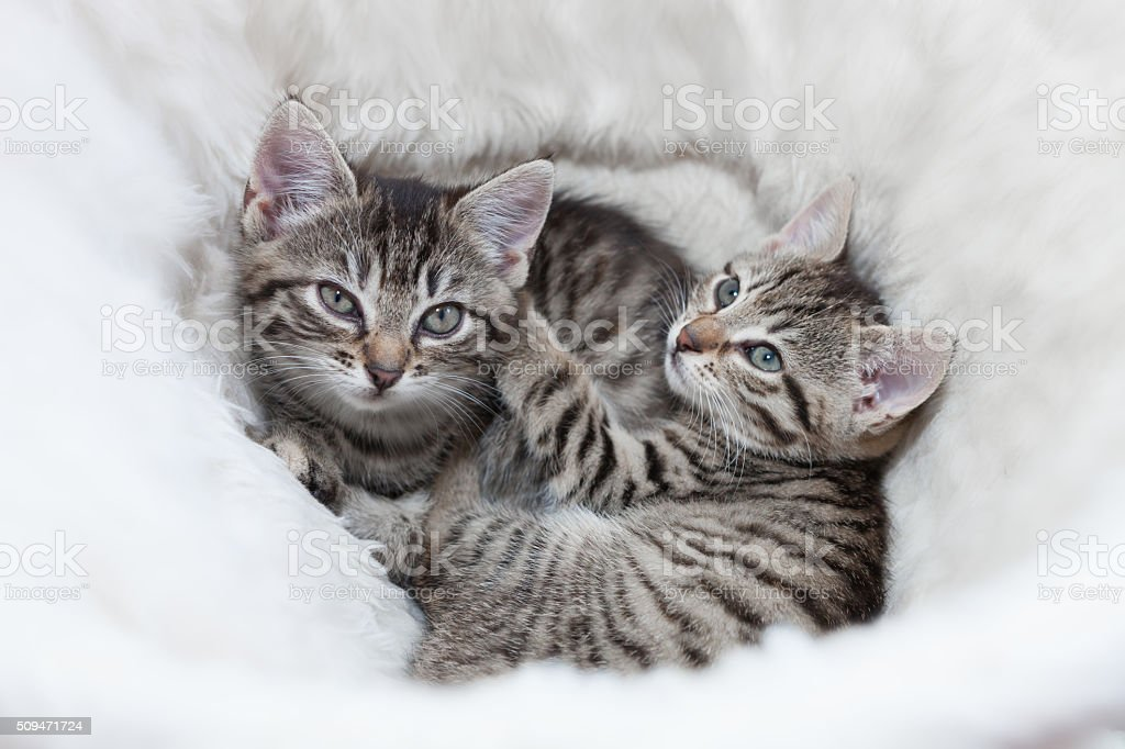 cuddling kitten stock photo