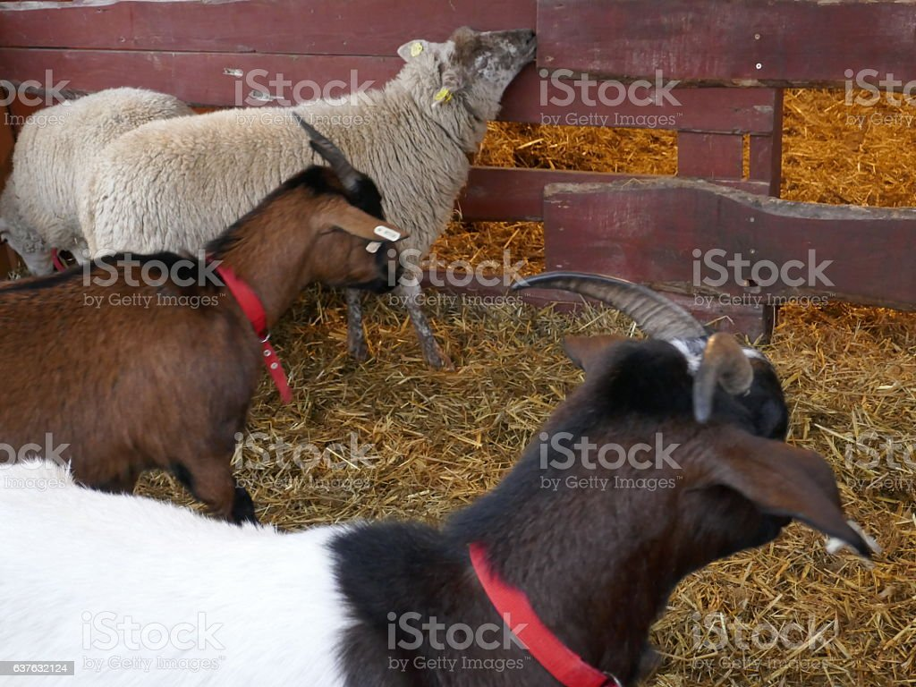Cuddly Farm animals stock photo