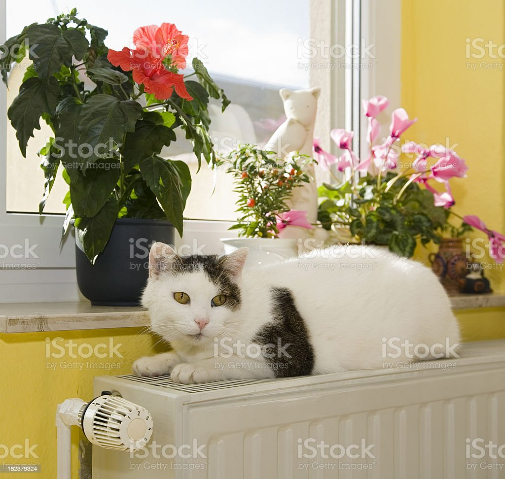 Cuddly place stock photo