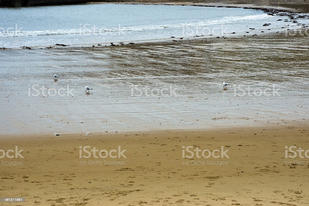 Cullercoats stock photo