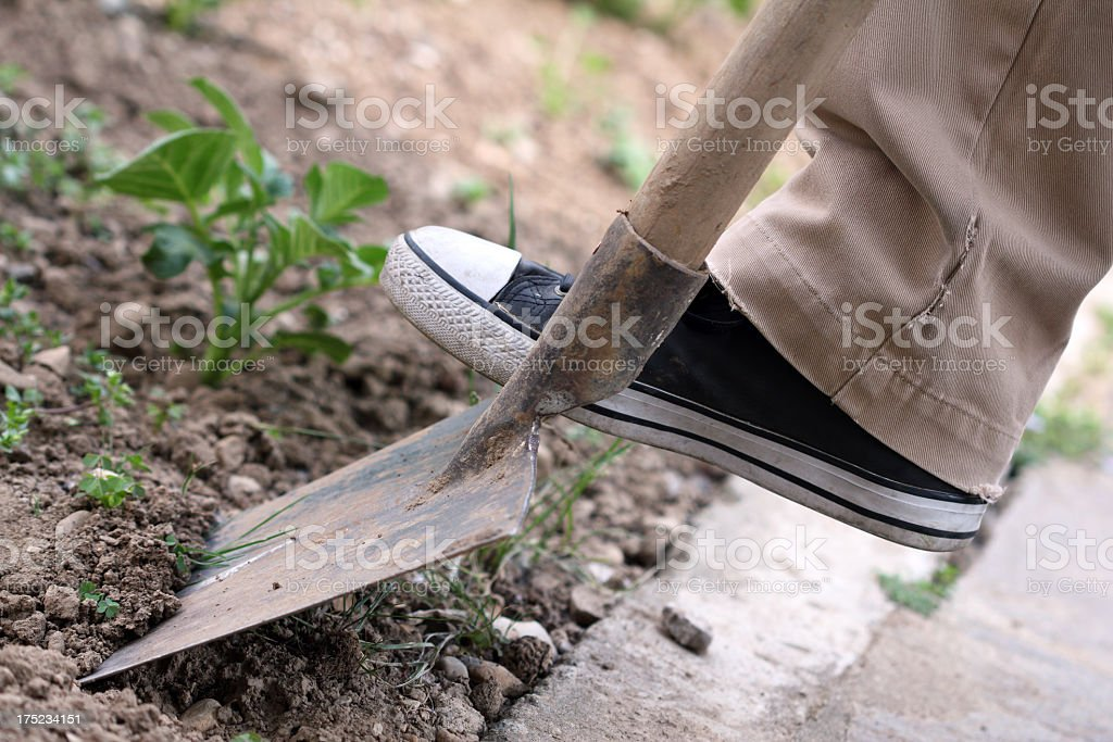 Cultivate your garden royalty-free stock photo