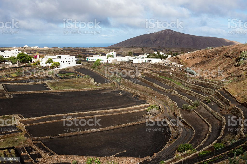 Cultivated black fields in Lanzarote stock photo