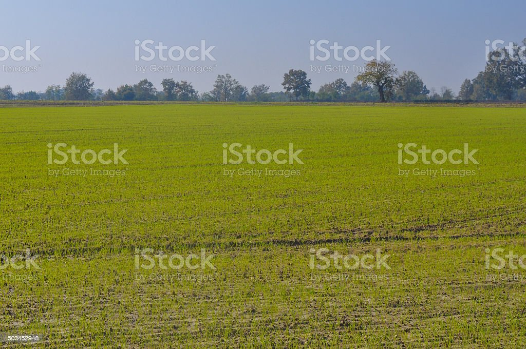 Cultivated field stock photo