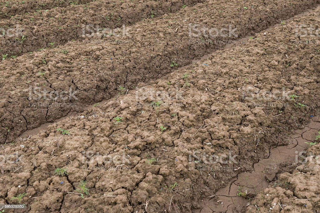 cultivated field  ready for sowing stock photo