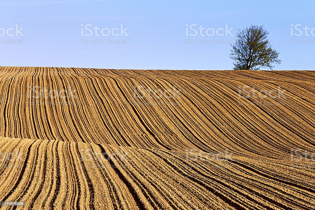 Cultivated ground royalty-free stock photo