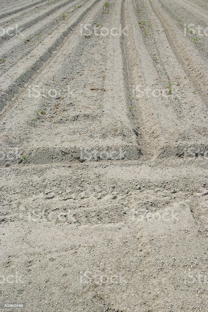 Cultivated Land background royalty-free stock photo