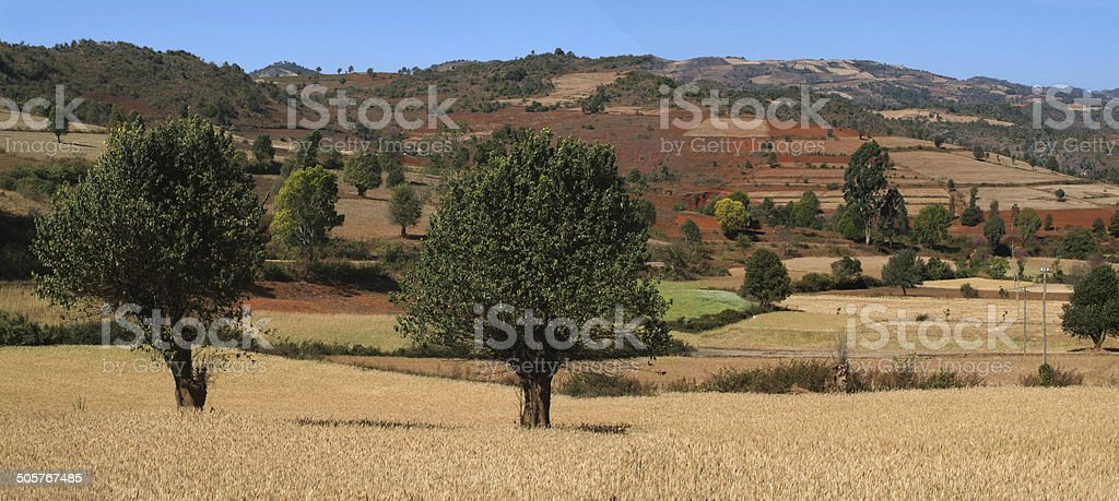 Cultivated land on Myanmar stock photo
