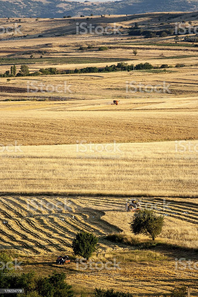 Cultivated land royalty-free stock photo