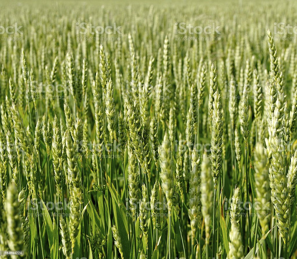 Cultivated land. royalty-free stock photo