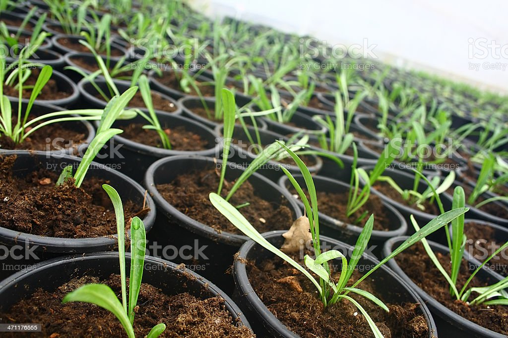 Cultivated plants stock photo