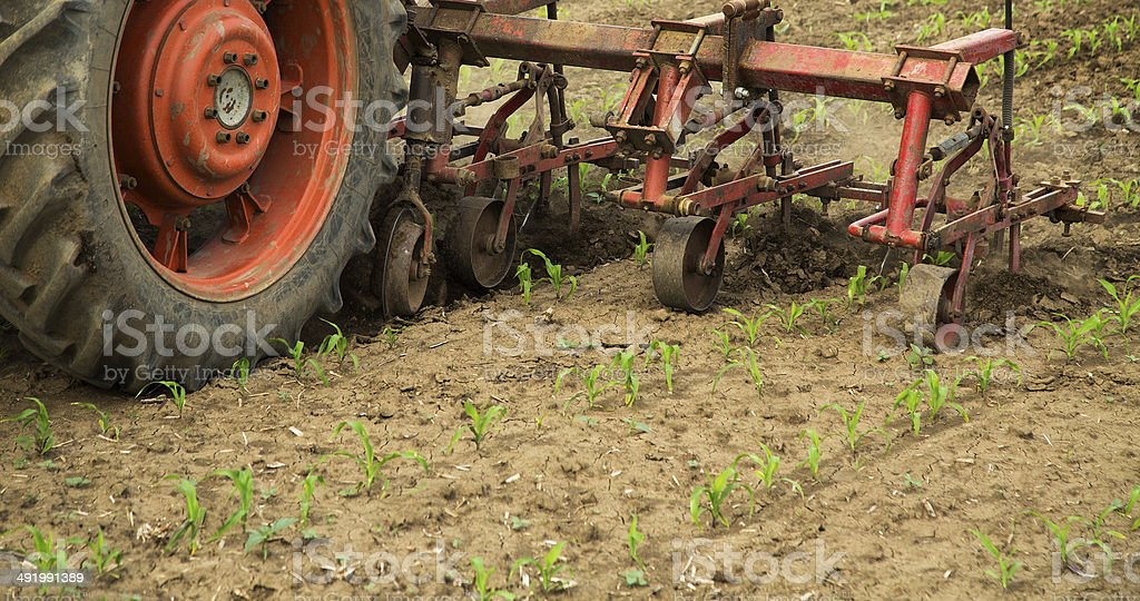 Cultivating field with row crop cultivator machine stock photo