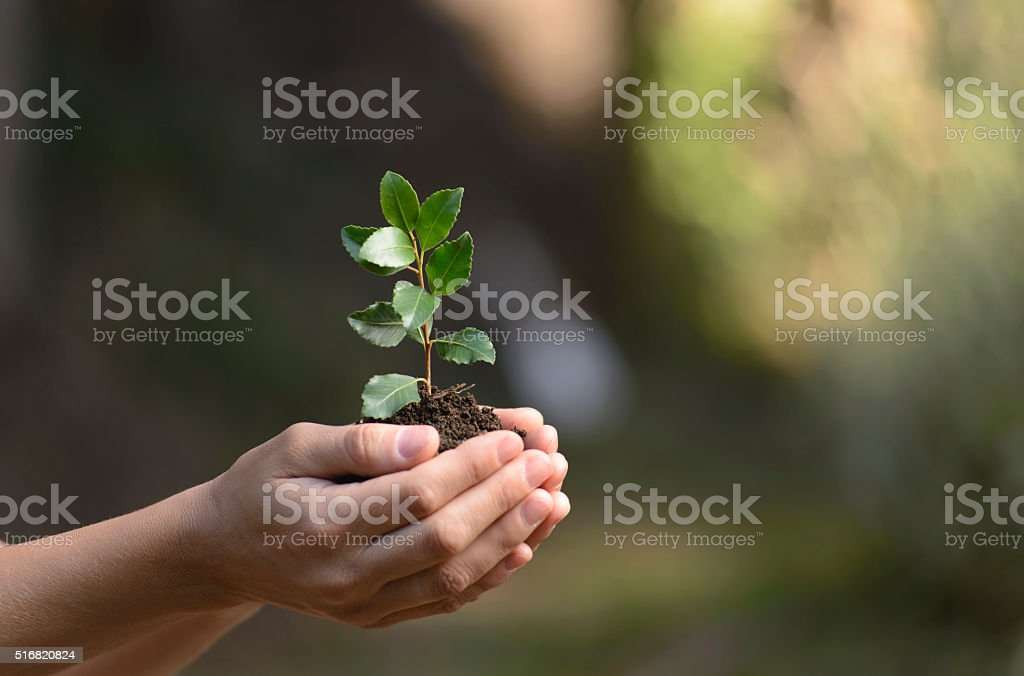 Cultivating the future in his hands. stock photo