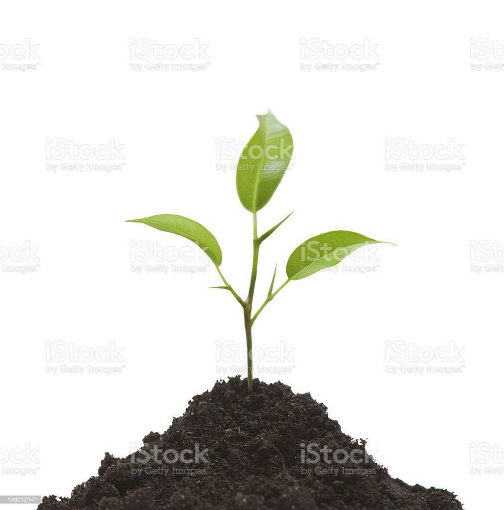 Cultivation of a young plant royalty-free stock photo