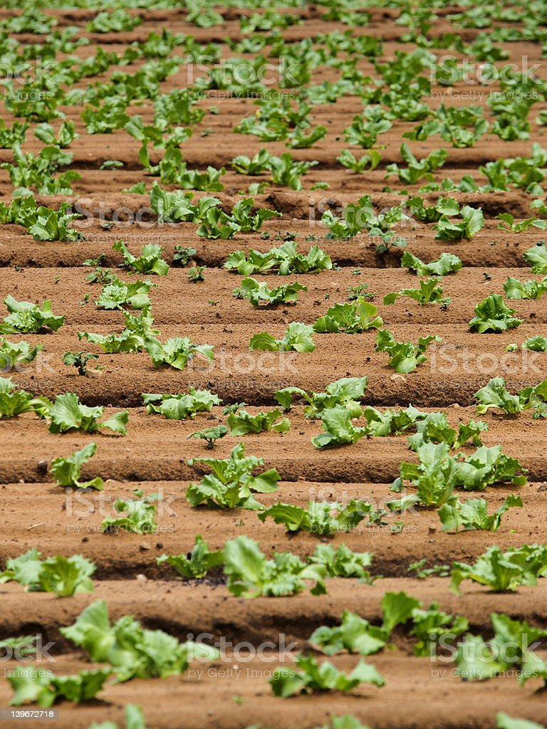 Cultivation stock photo
