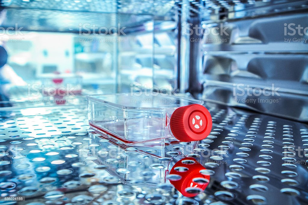 Culture Flask for Scientific Research stock photo