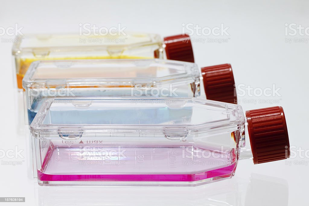 Culture Flasks stock photo