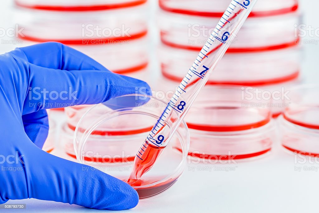 Culturing cells in small petri dishes stock photo