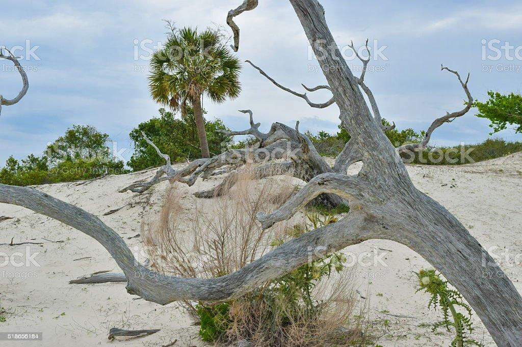 Cumberland Island, GA - Sand Dunes and Palm stock photo