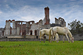 Cumberland Island, GA - Wild Horses and Ruins