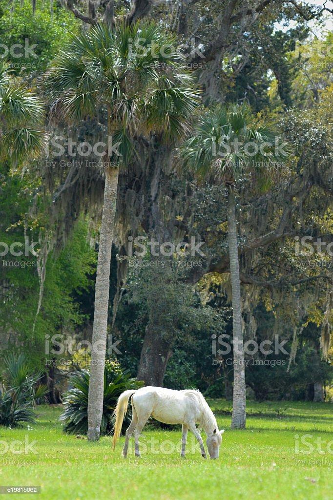 Cumberland Island, GA - Wild Horses stock photo