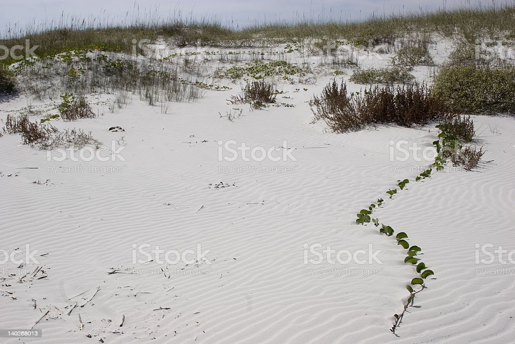 Cumberland Island Sand Dunes royalty-free stock photo