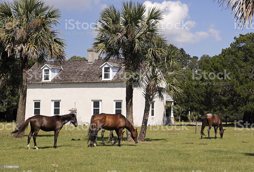 Cumberland Island Wild Horses royalty-free stock photo