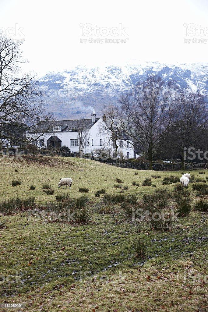 Cumbrian winter farm beneath snowy mountain royalty-free stock photo