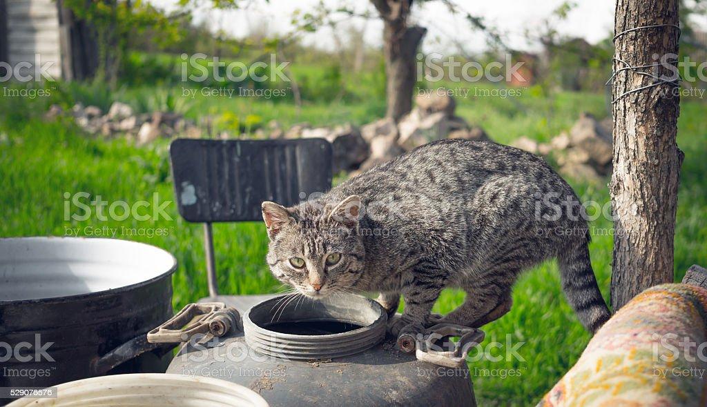 Cunning rural cat stock photo