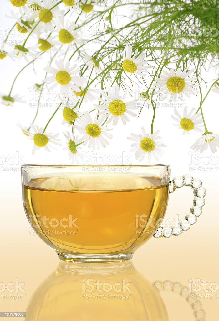 Cup of chamomile tea with fresh chamomilla flowers royalty-free stock photo