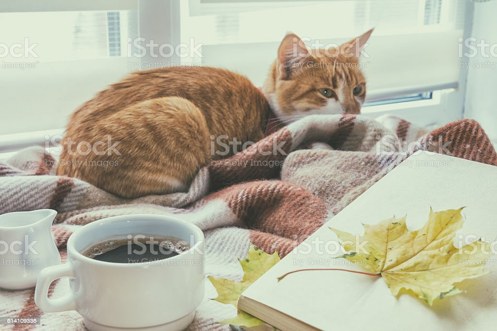 Cup of coffee, book with autumn yellow leaf and red-white cat...