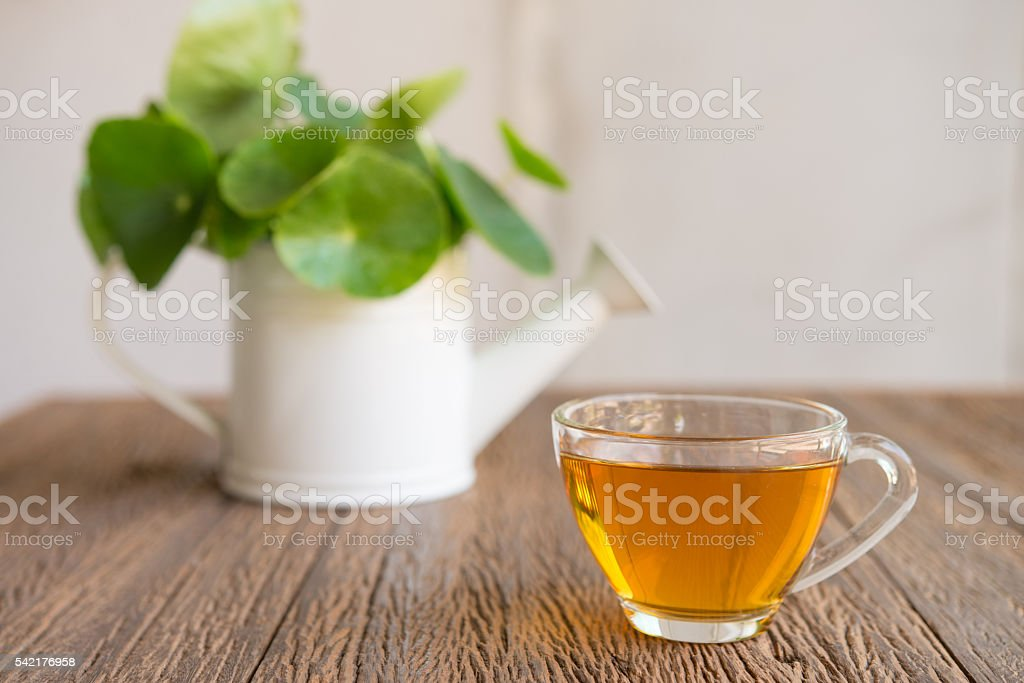 Cup of tea and Centella asiatica  on a wooden background stock photo