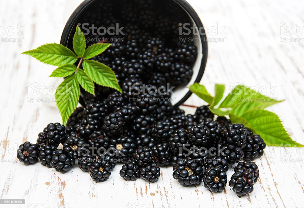Cup with Blackberries stock photo