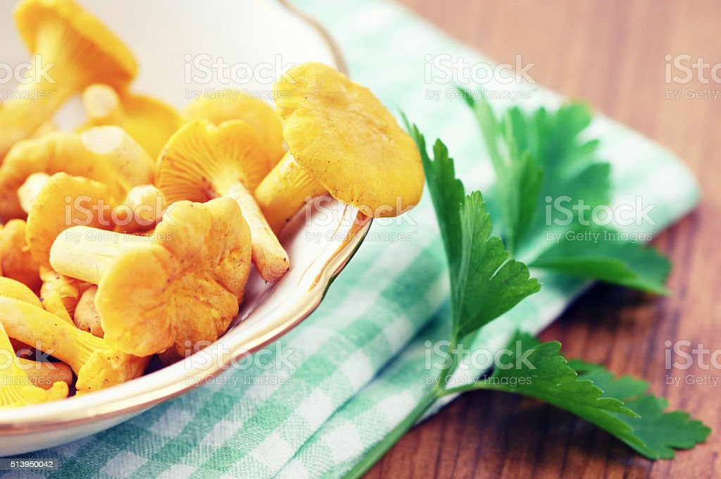 cup with fresh golden chanterelles mushroomes and parsley herb stock photo
