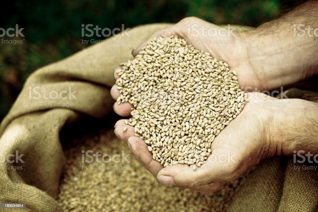 Cupped hands holding cereal stock photo