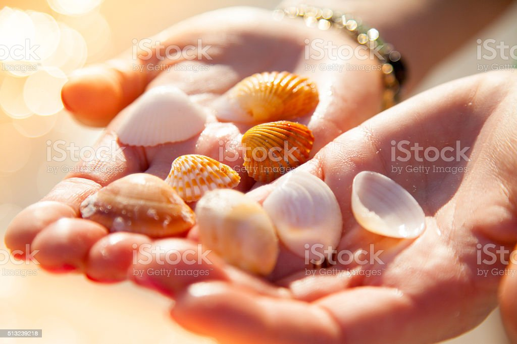 Cupped Hands holding seashells stock photo