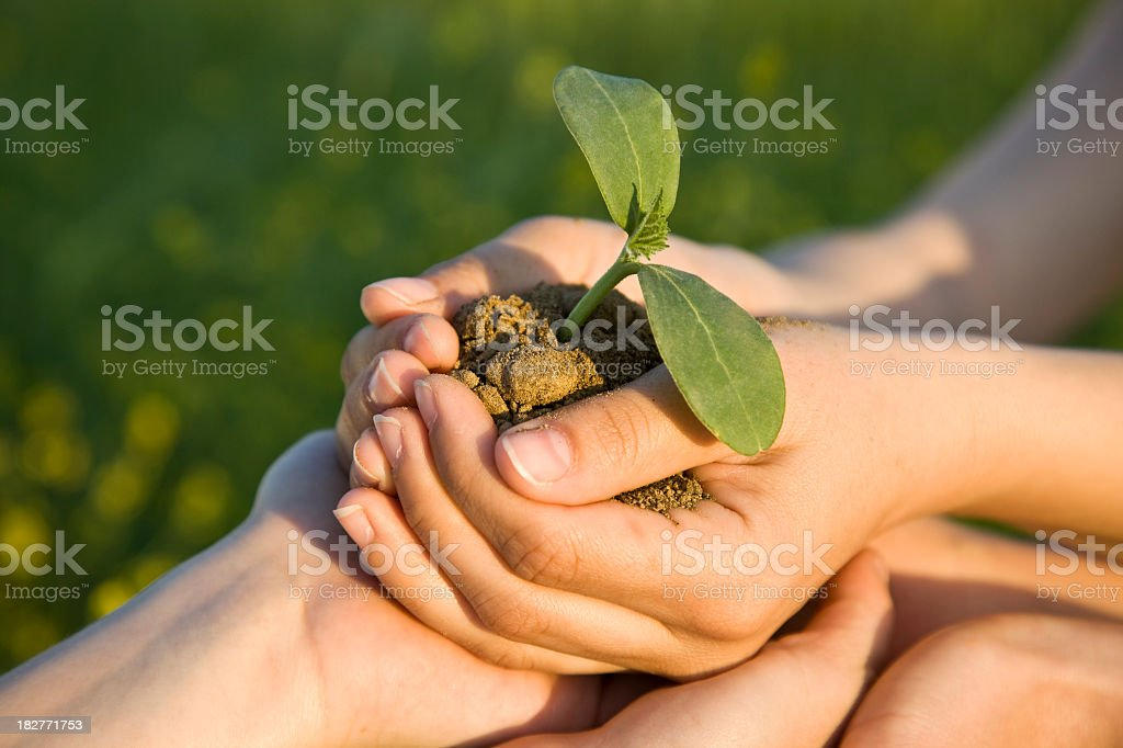 Cupped hands holding soil with a sprouting plant royalty-free stock photo