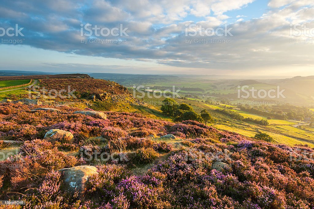 Curbar Edge Heather, Peak District National Park stock photo