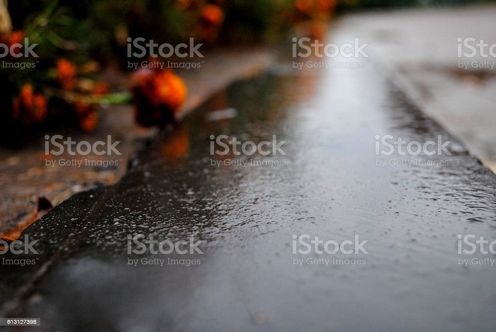 Curbs on the background of a red flower stock photo