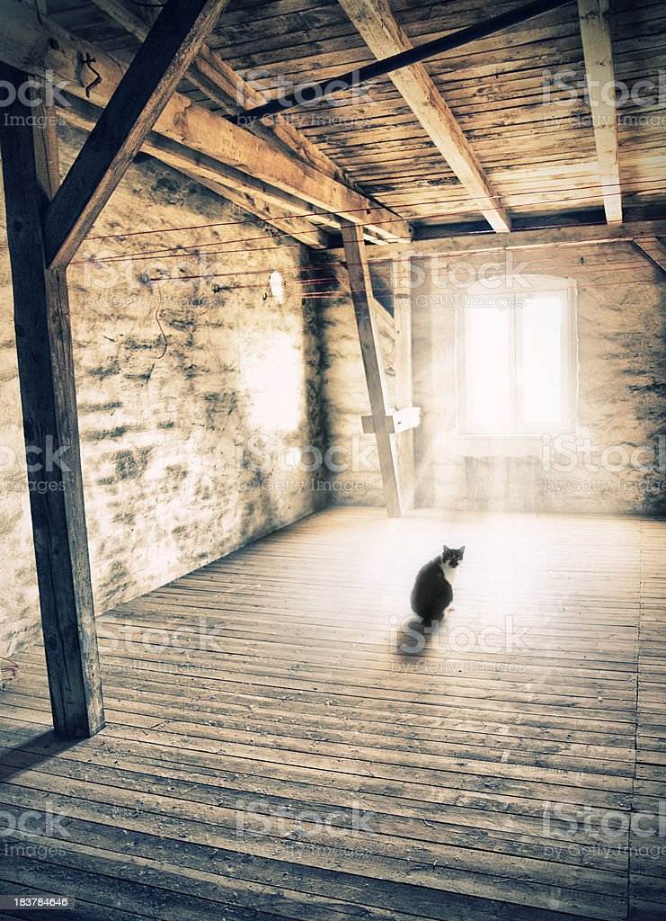 Curiosity cat in the attic stock photo