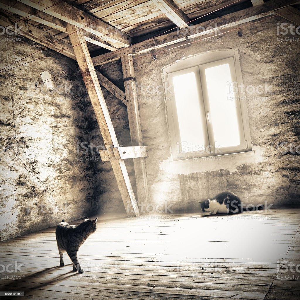 Curiosity cats in the attic stock photo
