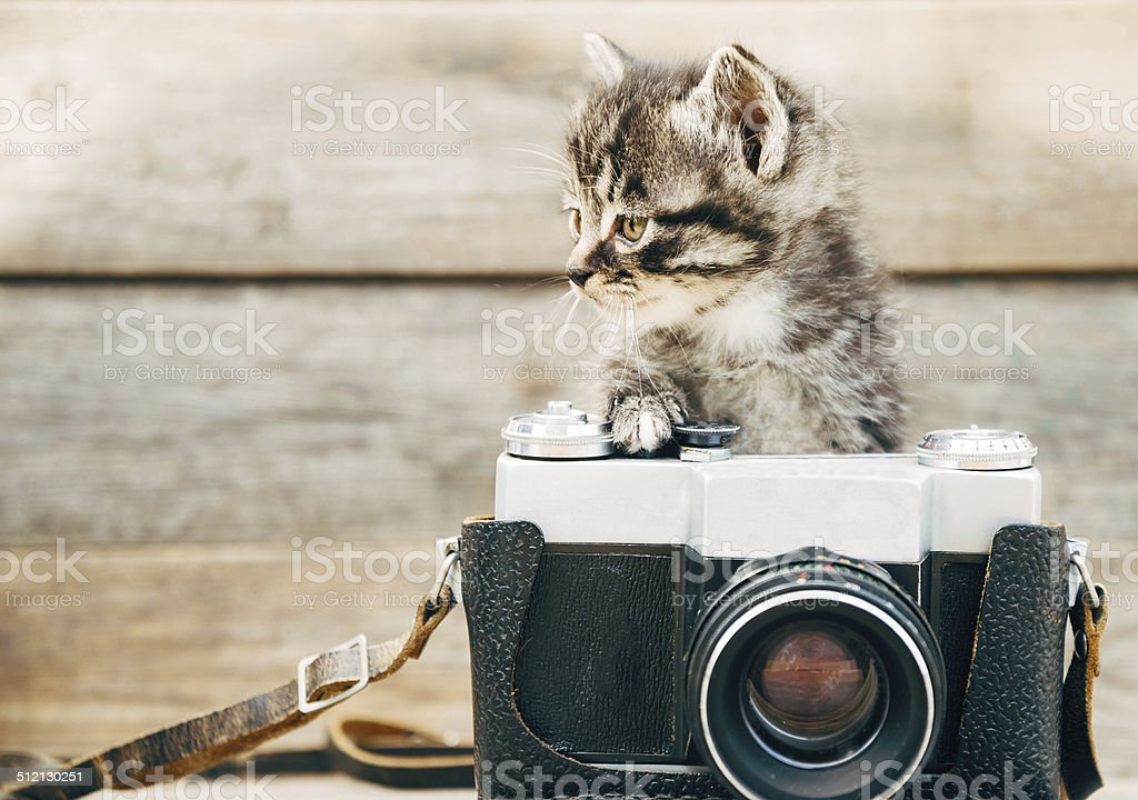 Curiosity kitten with old camera stock photo