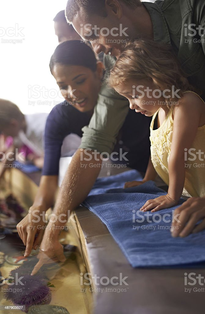 Curious about how they feel? stock photo