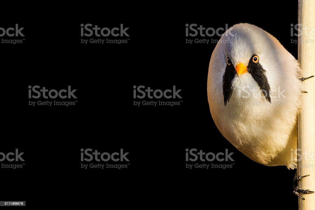curious bird stock photo