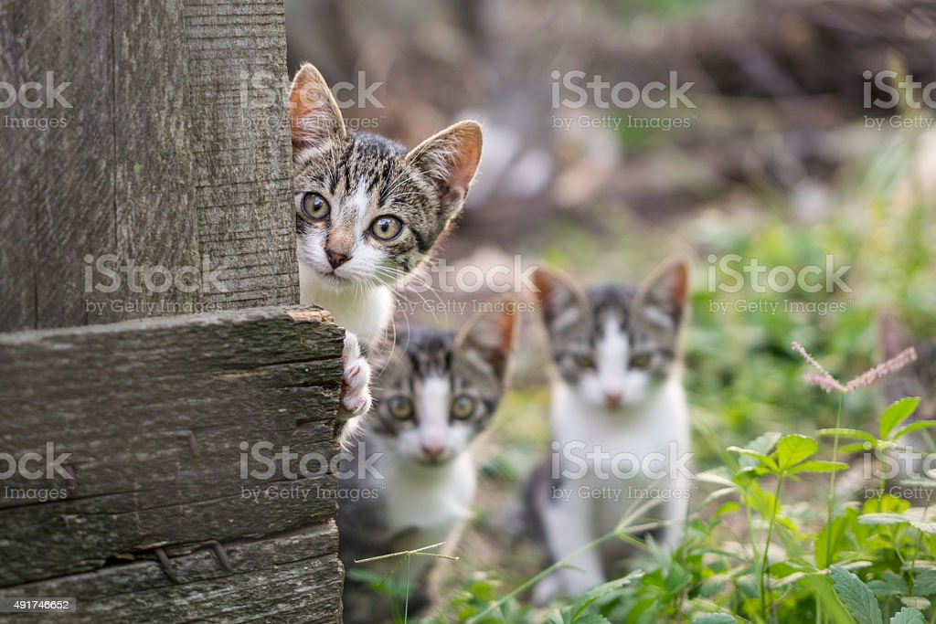 Curious but shy kittens stock photo