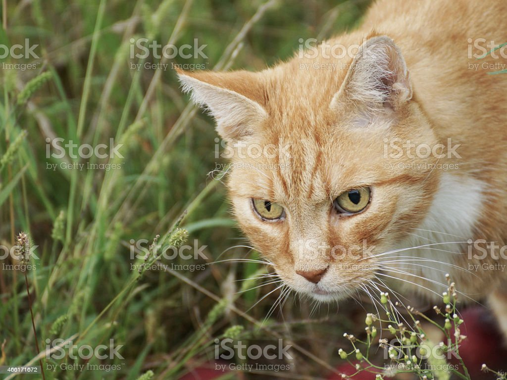Curious cat, and windfall stock photo