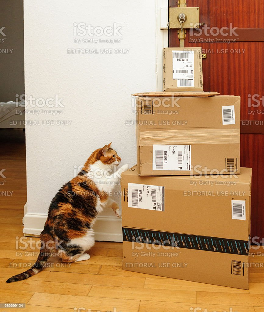 Curious cat inspecting multiple Amazon Prime boxes stock photo